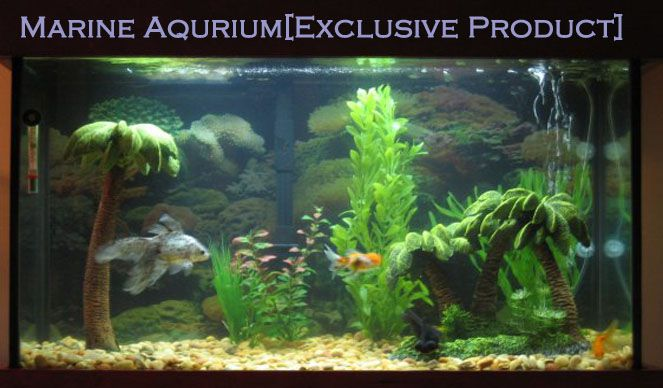 Shree Vinayak Fish Aquarium | Best Business Services in Udaipur | Business Portal in Udaipur